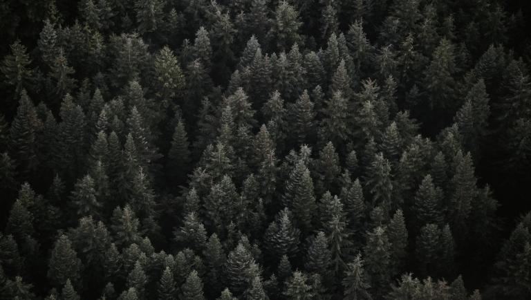 Arial shot of trees