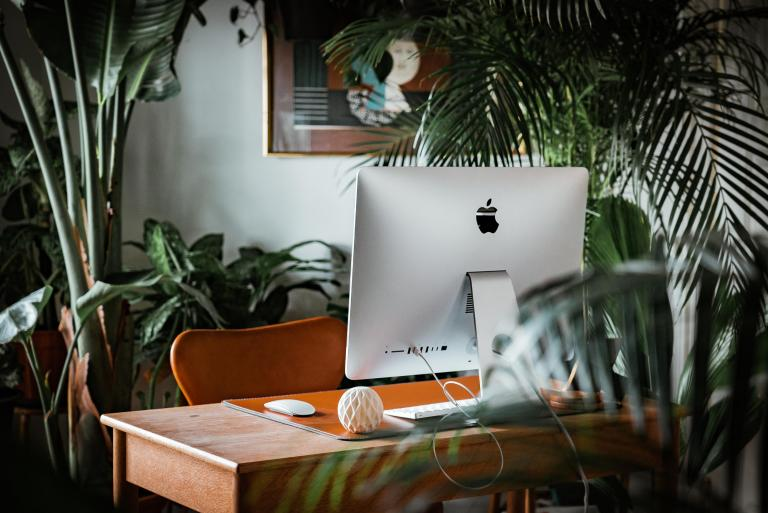 Imac in front of plant